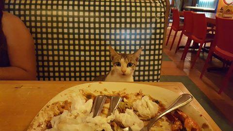 cat eating my food gabbys