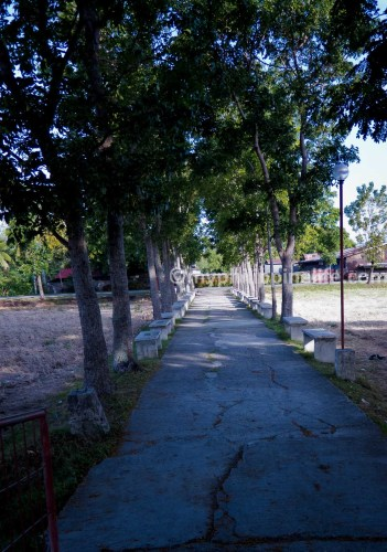 Tree lined path to Napnapan Barangay Hall, Tigbauan, Iloilo