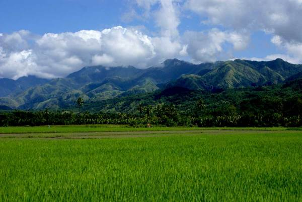 rice fields and the mountains on the right.  Between Laua-an and Tibao, Antique