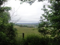 view from woods