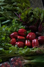 Vegetables from the Farmers Market Dubai -