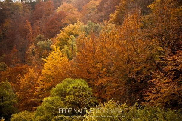FN_2013_Cantabria_0148