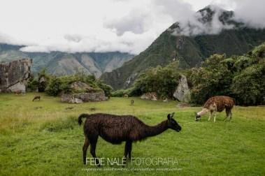 FN_MPYH_2011_Perú_CuzcoMachuPicchu_0023