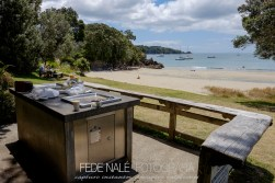 mpyh_2017_new-zealand_waheke-island_0015