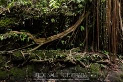 MPYH_2017_Indonesia_Ubud_Monkey Forest_0010