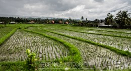 MPYH_2017_Indonesia_Viaje a Pemuteran_0006