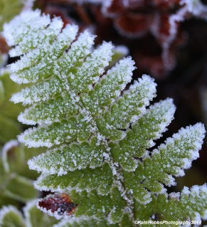 Frost and Fern