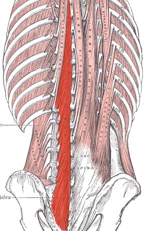 Core stability anatomy