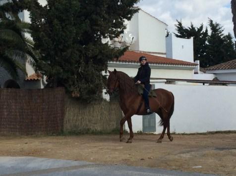 Andalusischer Hengst und ich