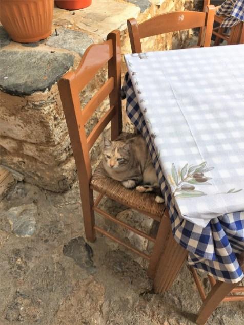 Katze Monemvasia