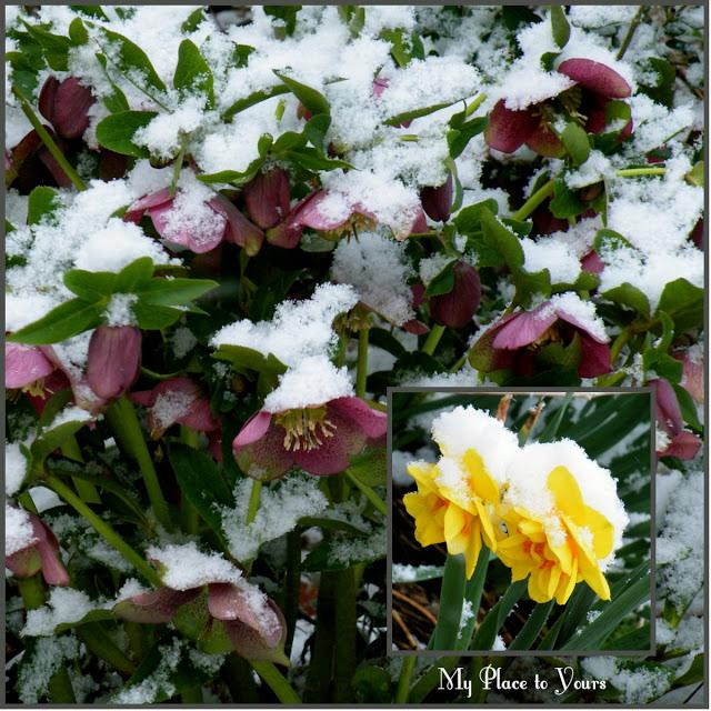 Winter+Spring