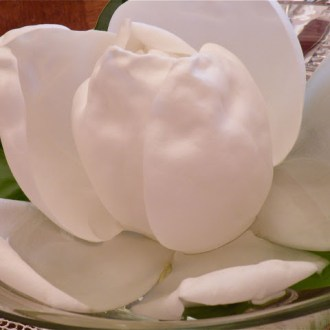 Memory-making and Magnolias …