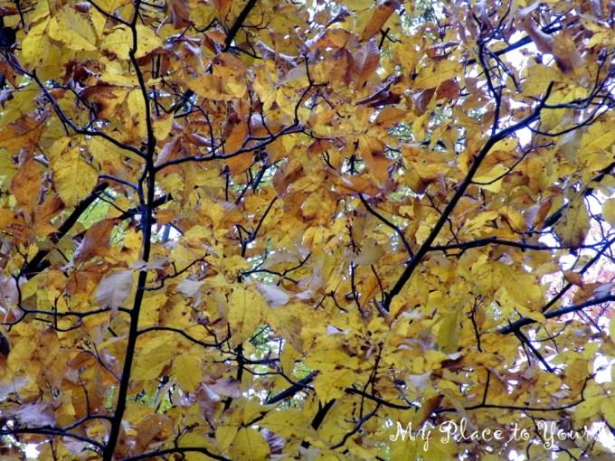 TN Autumn06