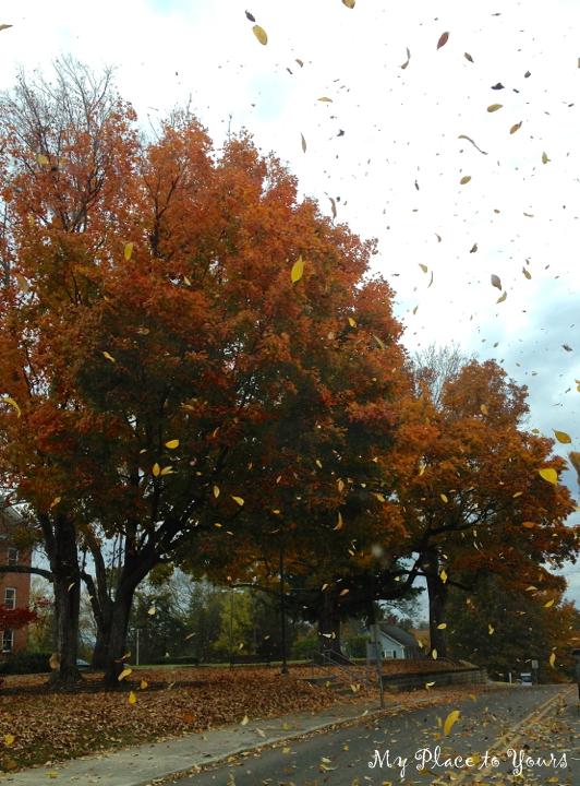 TN Autumn1