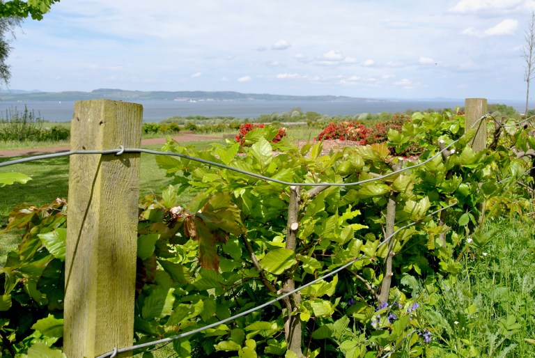 A wire fence, plants, red flowers, and the sea in the background.