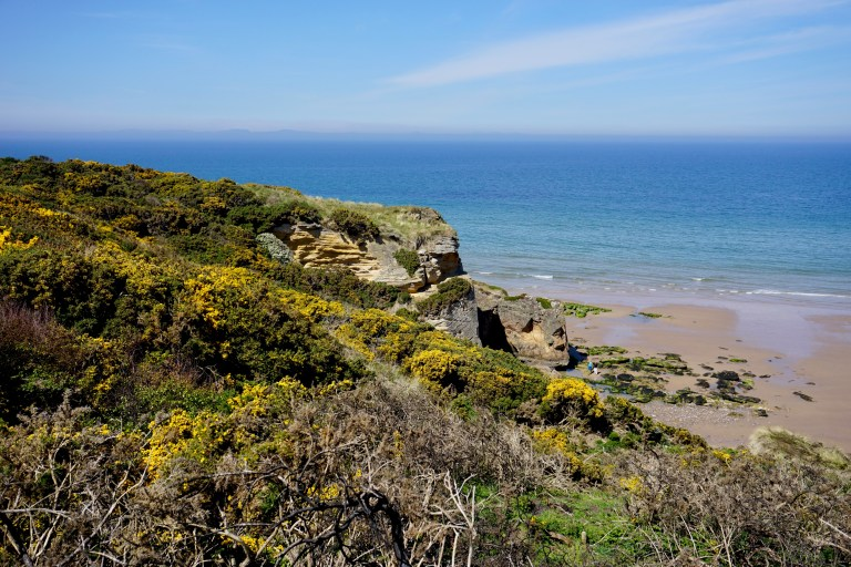Yellow gorse covered cliff at Cove Bay in Scotland.