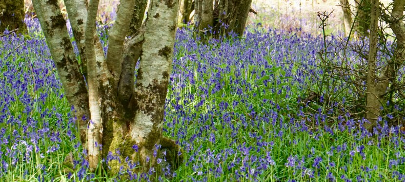 "A Silent Eloquence-""The Bluebell"" by Anne Bronte"