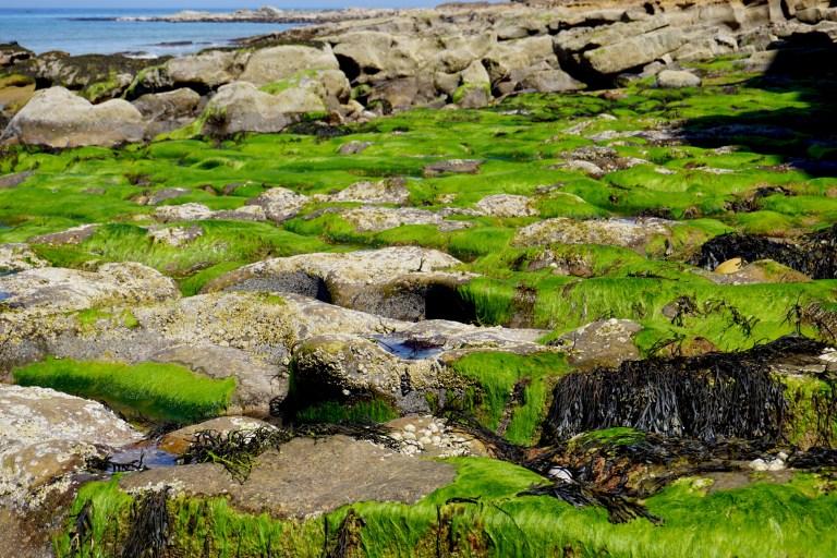 Bright green algae covered rocks.