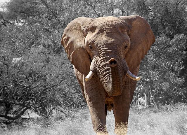 pierderea in greutate a elefantului