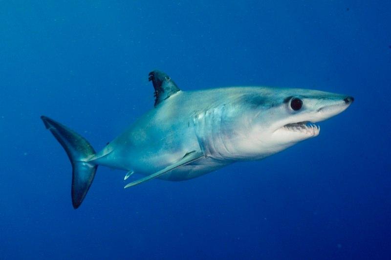 разновидность акул с фото отеле нормальный, скажу