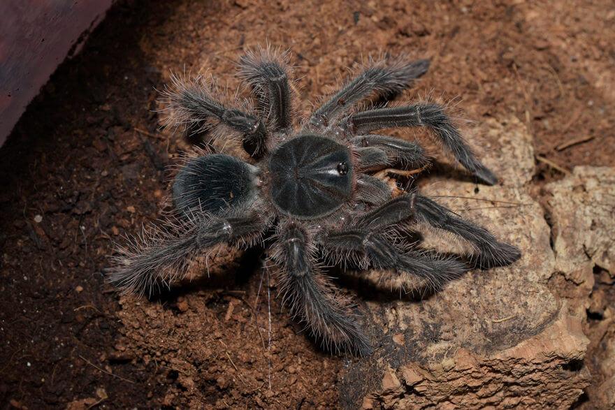 картинка большой паук в мире были