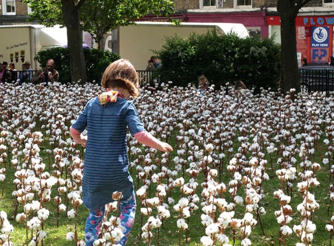 cotton-field-2