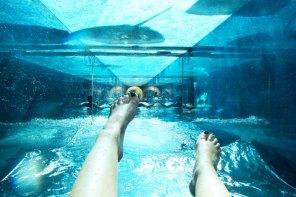 Aquaventure shark tunnel waterslide