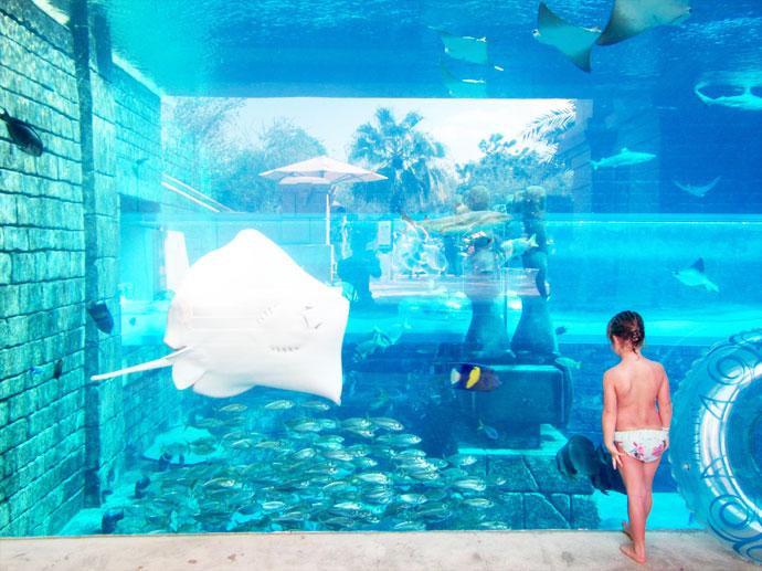Shark Attack - Aquarium Dubai Aquaventure