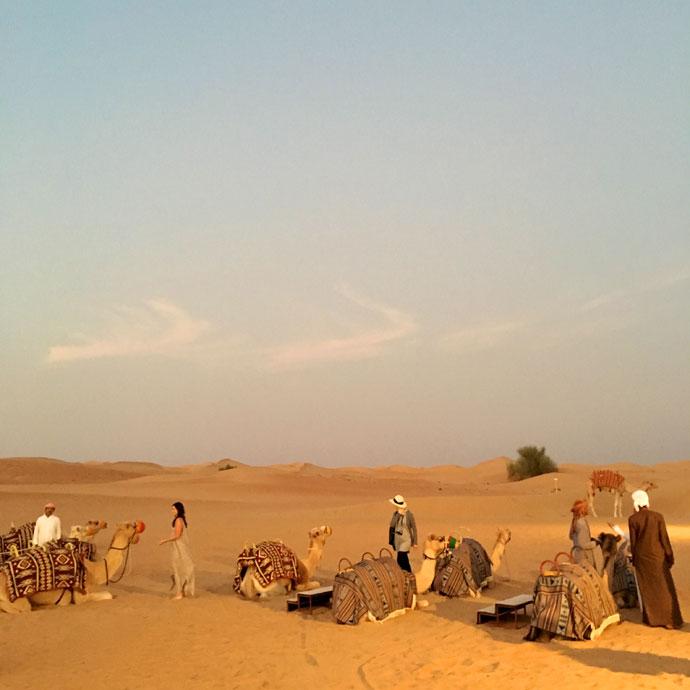 bedouin camels Dubai