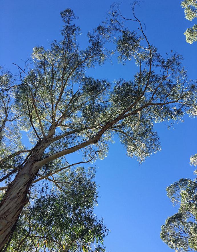 healesville_bush