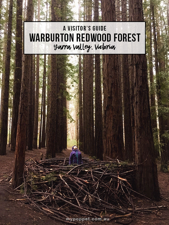 Visit the Redwood Forest in East Warburton, Victoria. An amazingly magical place that the kids will love to explore. #travelwithkids #travelaustralia #australia mypoppet.com.au