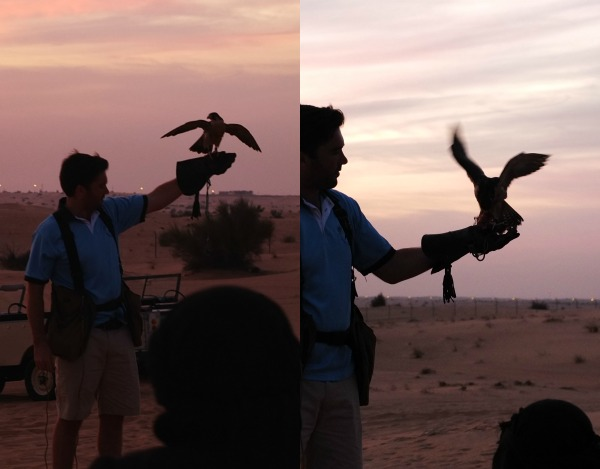first class safari tour dubai arabian desert - falcon display at sunset mypoppet.com.au