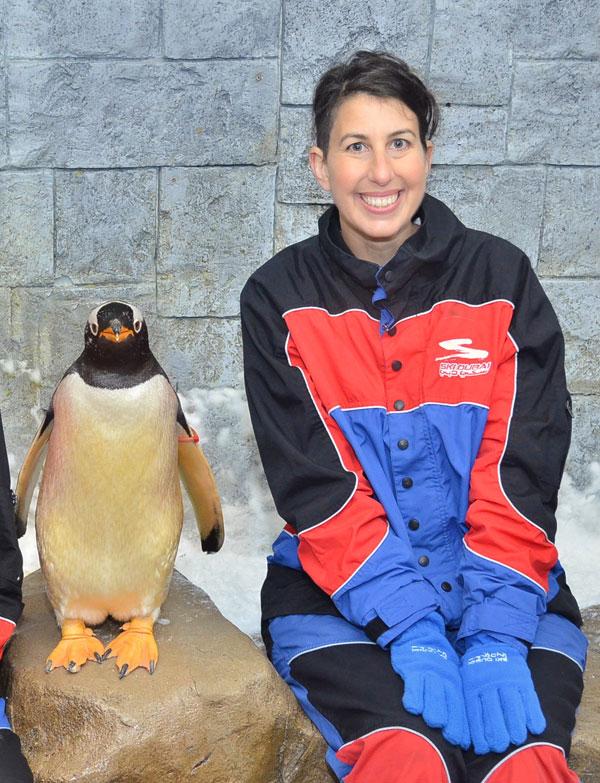 Penguin encounter dubai