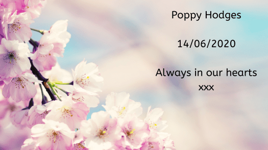 Remembering our babies: Poppy Hodges.