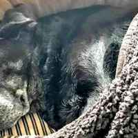 Loyal senior dog found next to owner who passed away