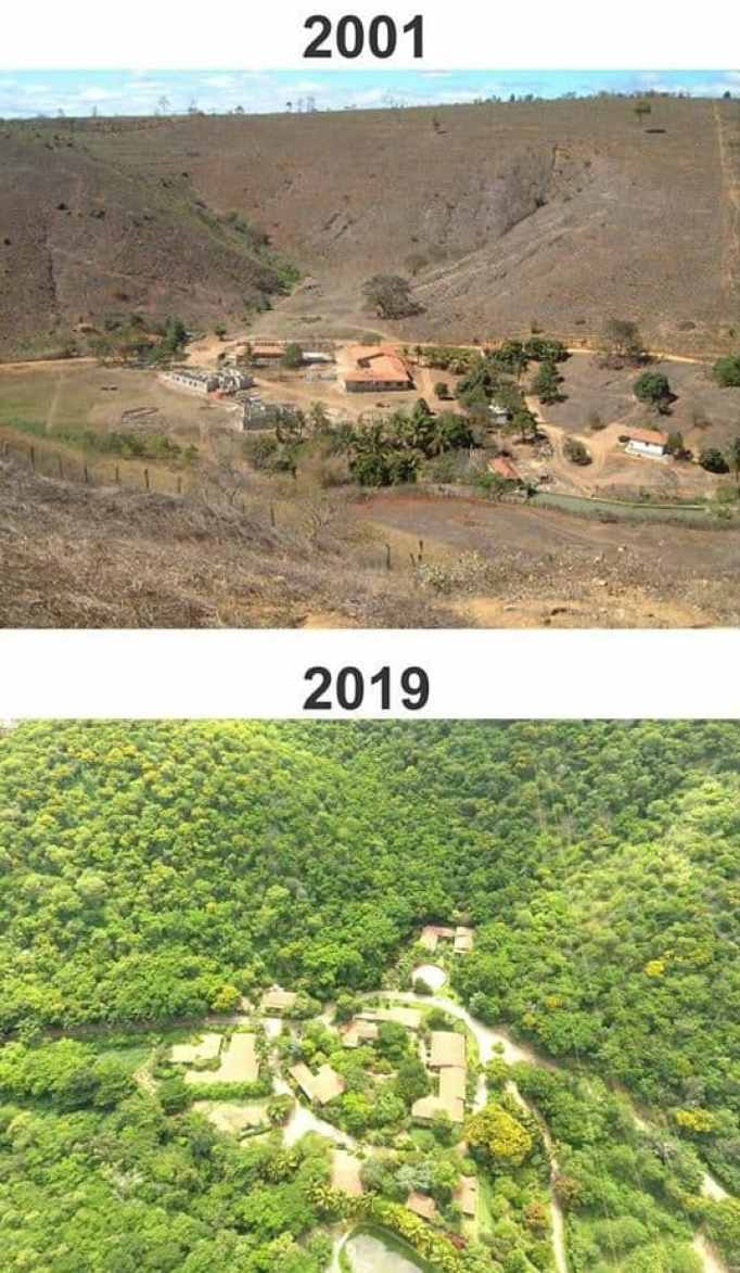 Couple planted trees to stop rainforest destruction.