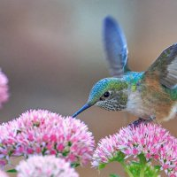 8 plants that will attract hummingbirds to your garden
