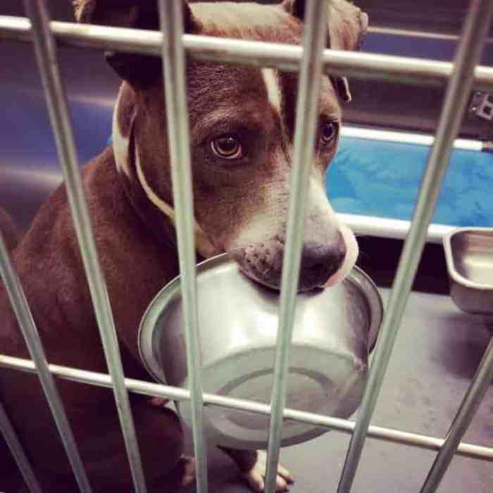Oliver the shelter dog