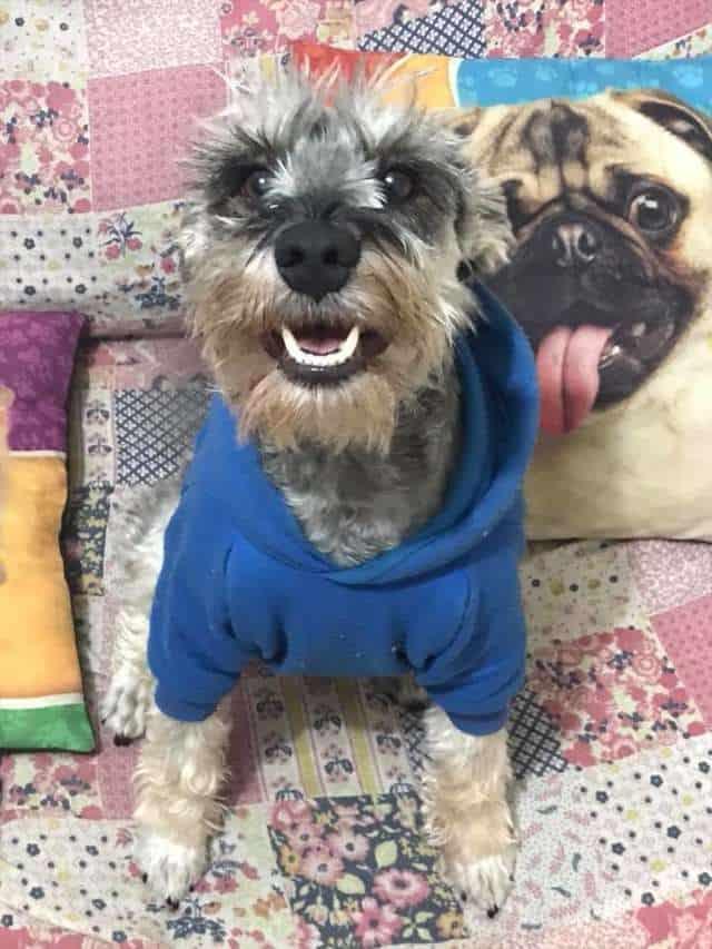 Otávio the dog