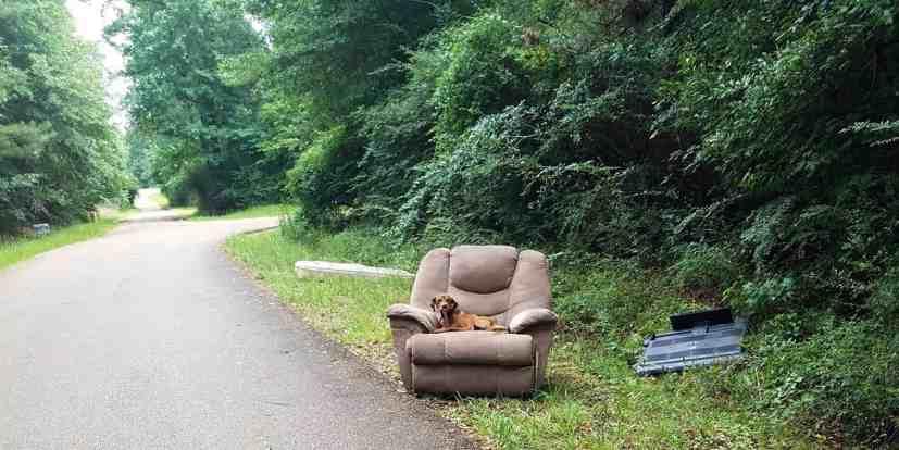 dog dumped on recliner