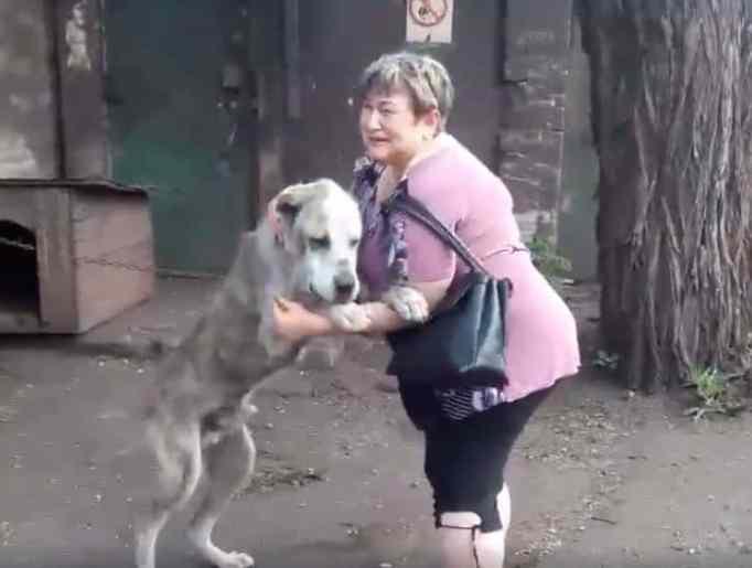 dog-human-reunite