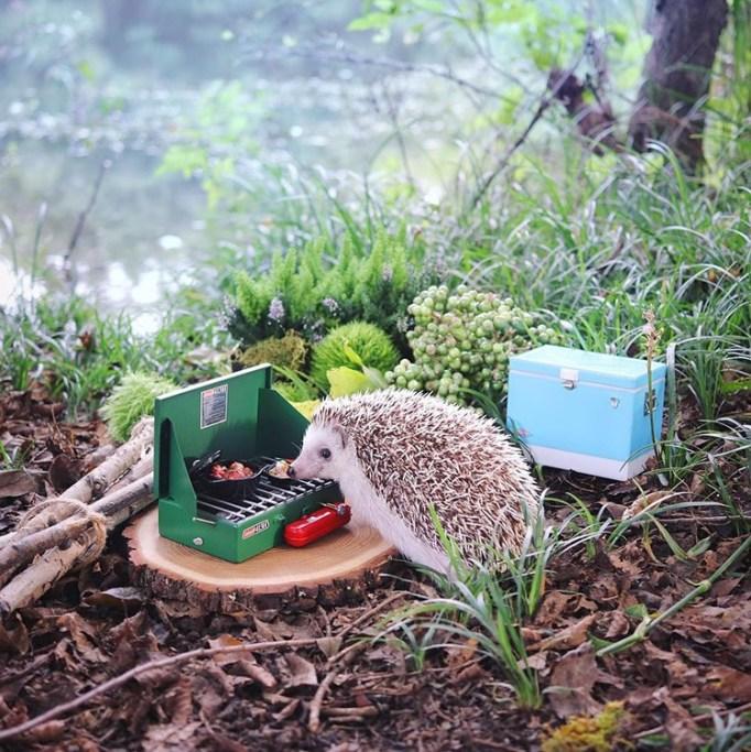 azuki-camping-hedgehog-4