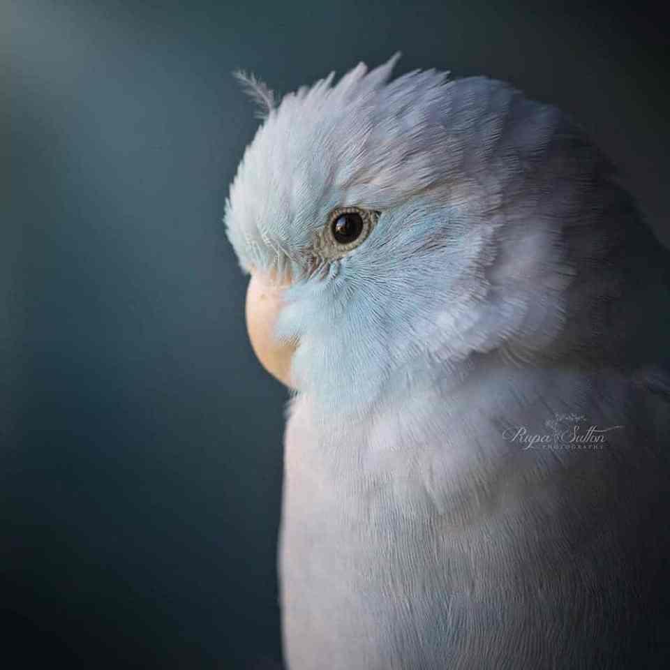 bird-photography-rupa-sutton-11