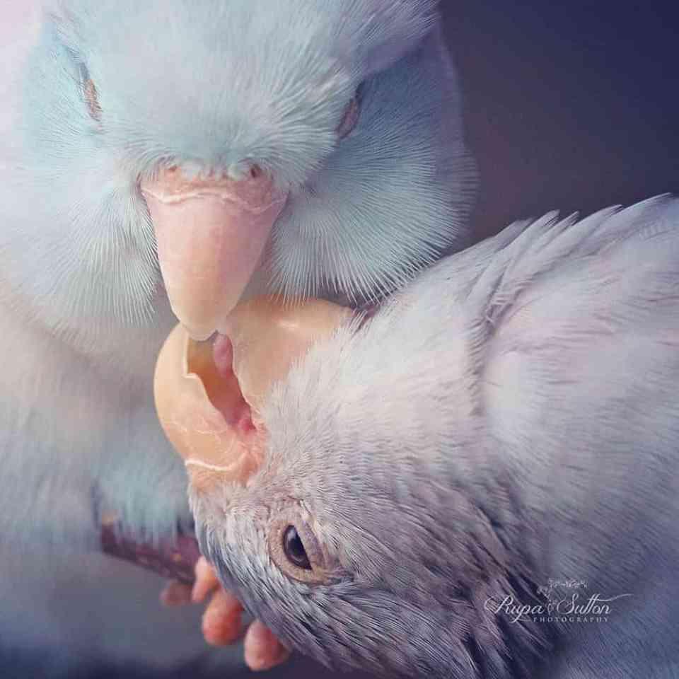 bird-photography-rupa-sutton-13