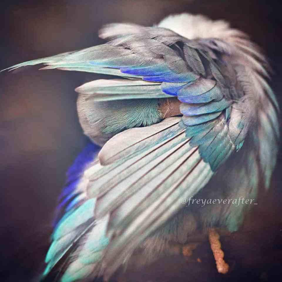 bird-photography-rupa-sutton-2