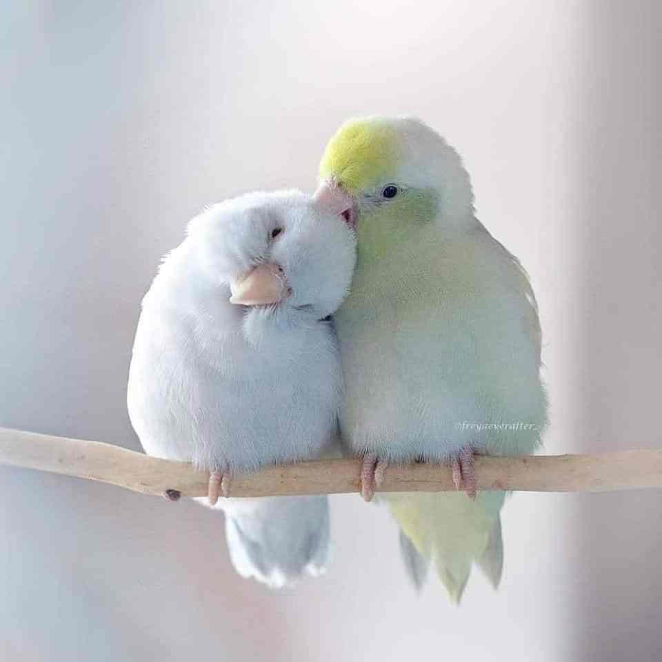 bird-photography-rupa-sutton-6