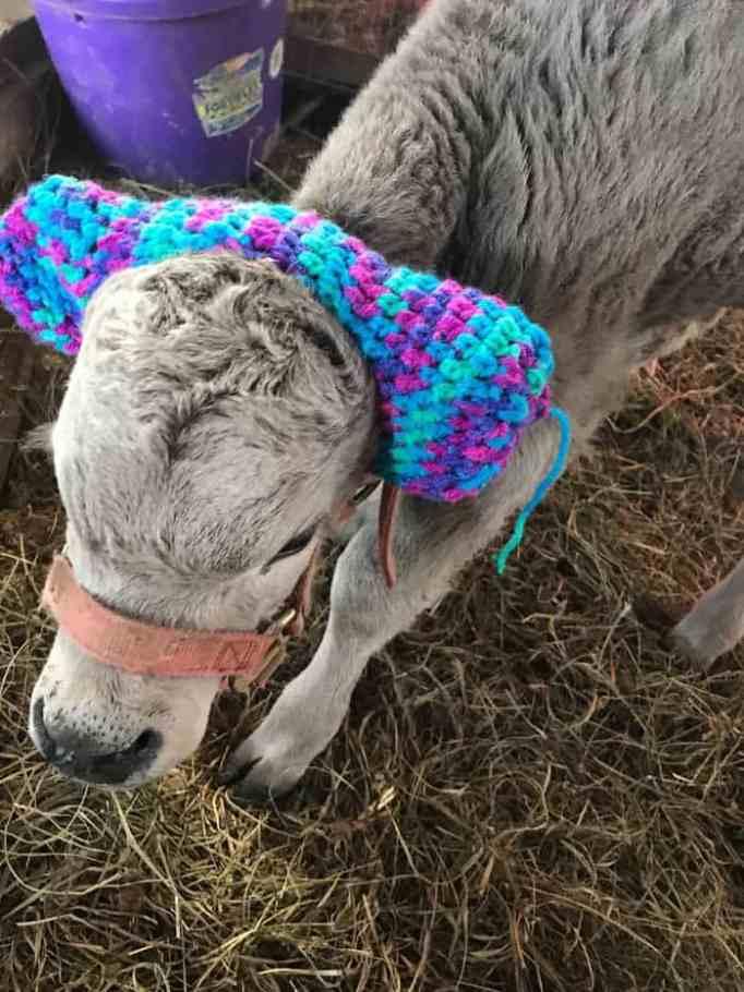 cute-cows-earmuffs-5d1b454f3354e__700