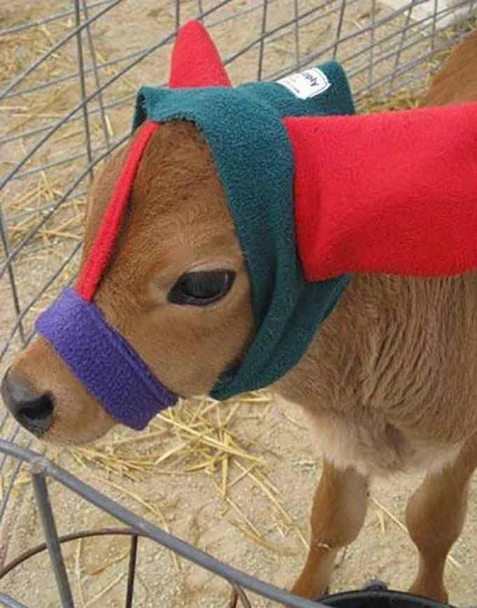 cute-cows-earmuffs-5d1b4555634a7__700