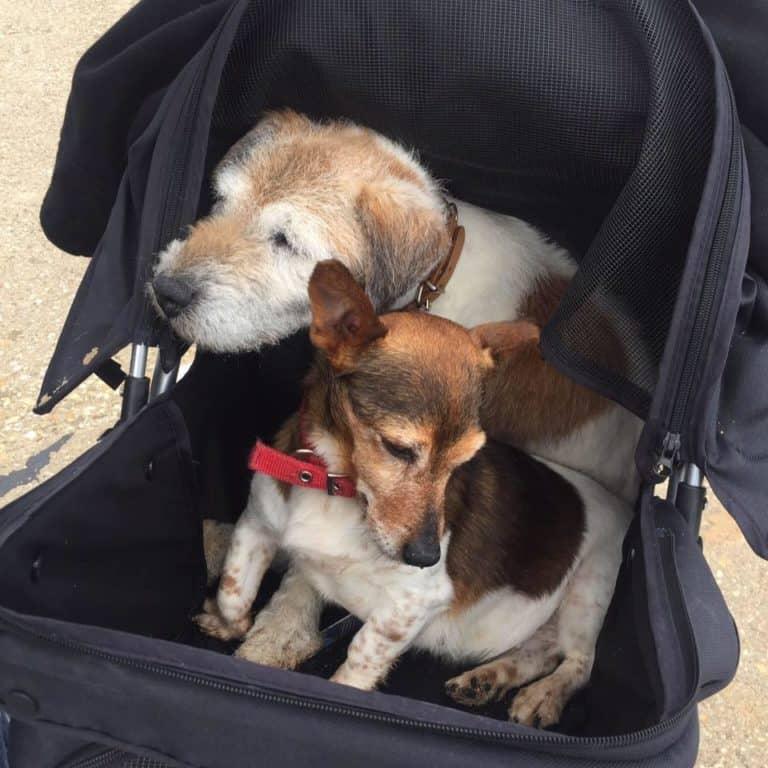 dogs-stroller-768x768