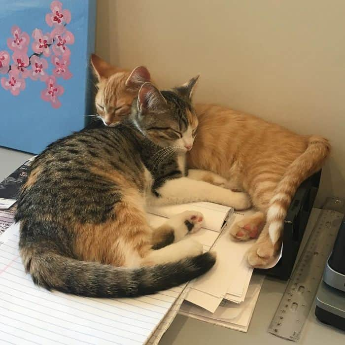 office-kittens-debit-credit-ohio-3-5d1c518eb5ca2__700